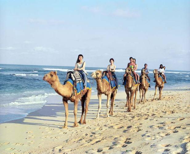 bali, camel, ride, bali camel, nusadua, nusadua bali, place, place to visit