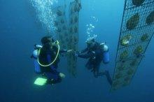 underwater-jatlas-south