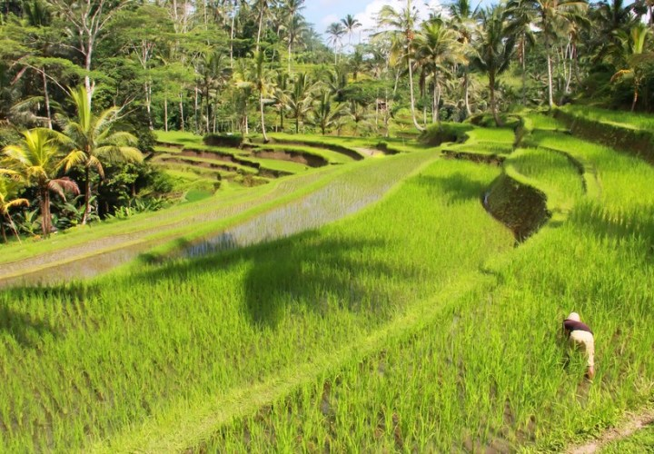 Subak, Philosophy of Harmony in Bali's
