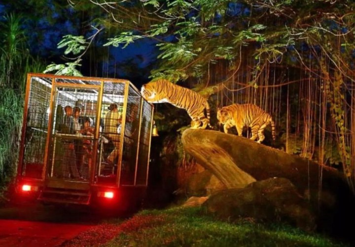 Night at Zoo Gianyar, Night Vacation in Bali