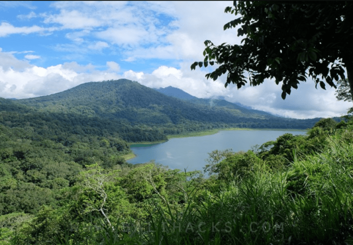 Mysterious and Sacred Atmosphere of Lumut Forest in  Lesung Mountain