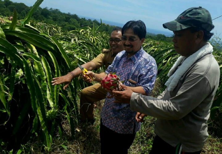 Mengwitani Dragon Fruit Farm Agrotourism, A New Vacation Atmosphere Choice in Bali