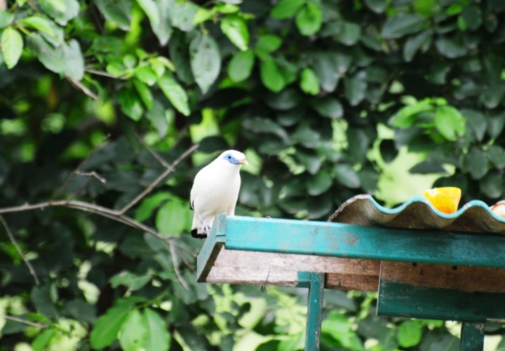 West Bali National Park, Get Closer to the Bali Starling Here