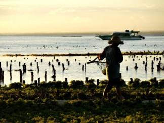 seaweedfarmer10