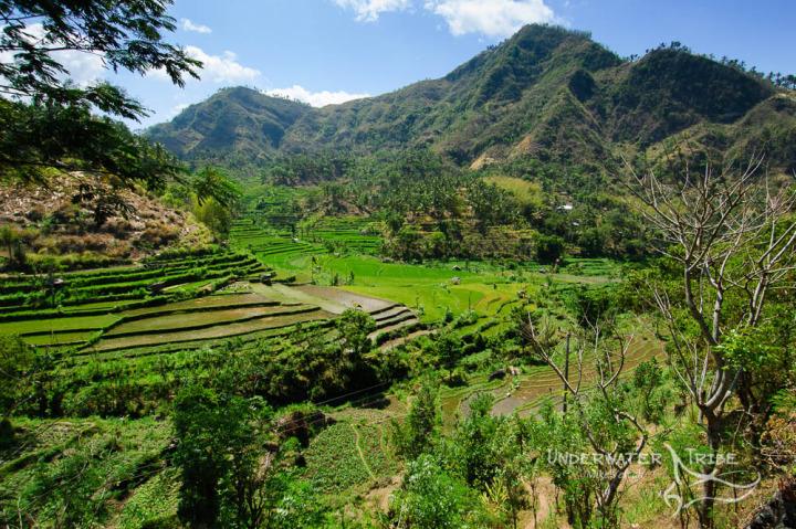 Bali Rice Terraces