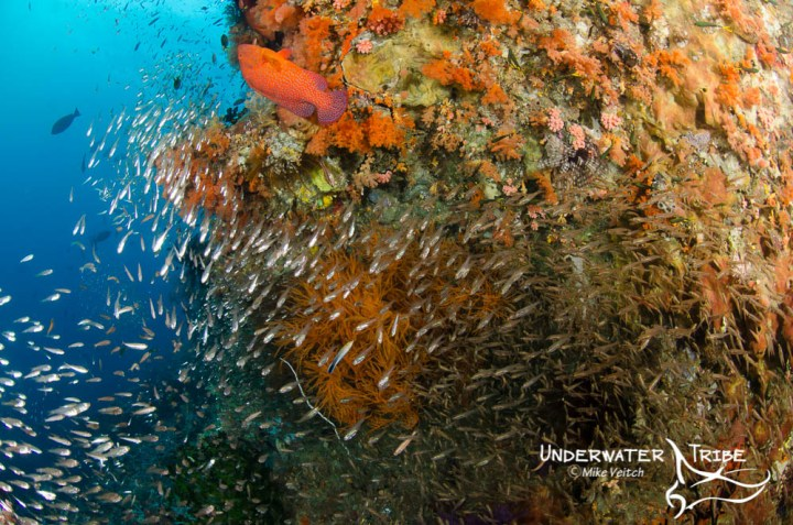 Baitfish and Soft Corals