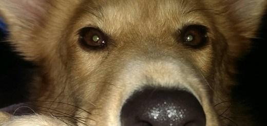Wer kann diesem Blick widerstehen? Zuco ist nun ein glücklicher Hund, der eine liebevolle Familie in Deutschland gefunden hat (Foto: Lisa Hinze)