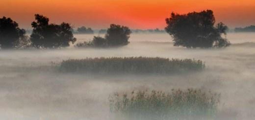 Unendliche und mystische Nebelfelder über Moorgebieten sind bezeichnend für Slawonien (Foto: Damir Rajle)