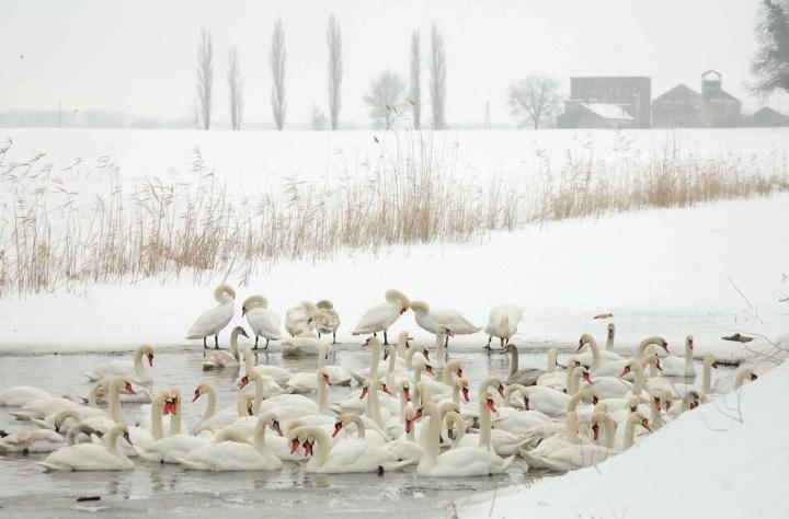Trotz klirrender Kälte ist die Winterlandschaft einen Spaziergang wert (Foto: Damir Rajle)
