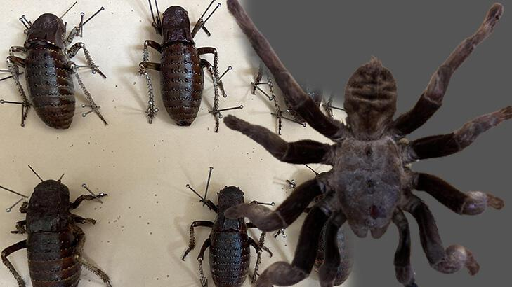 2 bin böcek türü Edirne'de!
