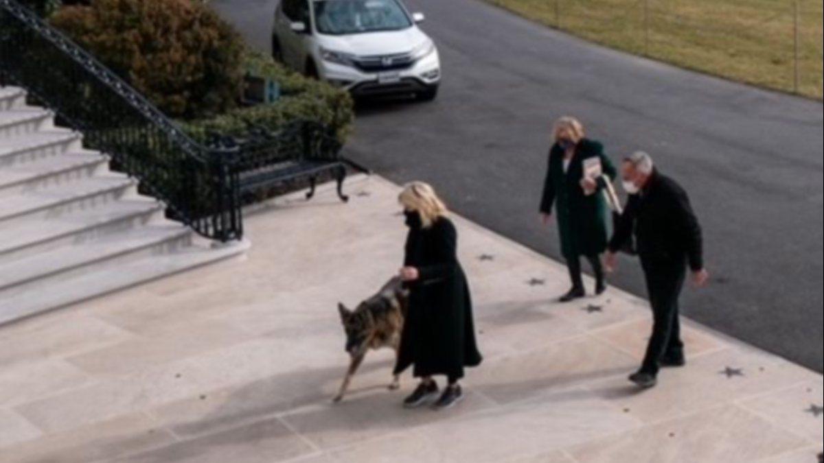 Biden köpeklerini de Beyaz Saray'a getirdi