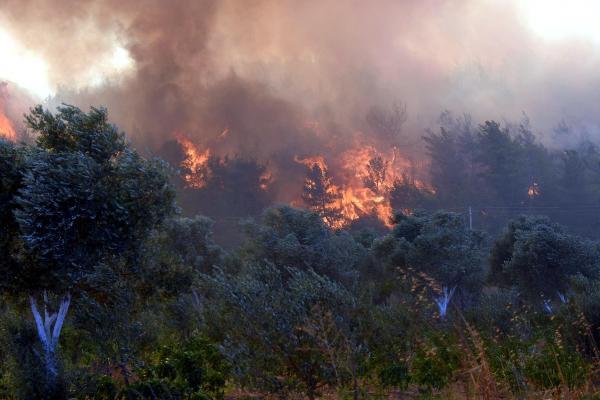 Son dakika haberi! Menderes'teki orman yangını davasında bilirkişi raporu istendi