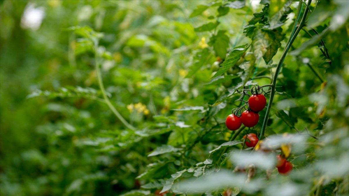 Türk tarımı, yatırımcılar için cazibesini koruyor