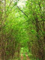 Horgoška šuma
