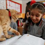 Mačka se vratila u školsku klupu, upisala četvrti razred