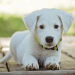 Šta je štenećak i koliko je opasan