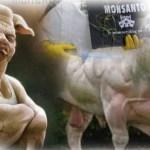 """U Srbiji se uvozi GMO hrana. """"Iz EU nam šalju đubre koje ne daju svojim građanima"""""""