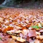 Zašto je 12. oktobar najneobičniji dan u godini: Danas slavimo Miholjdan