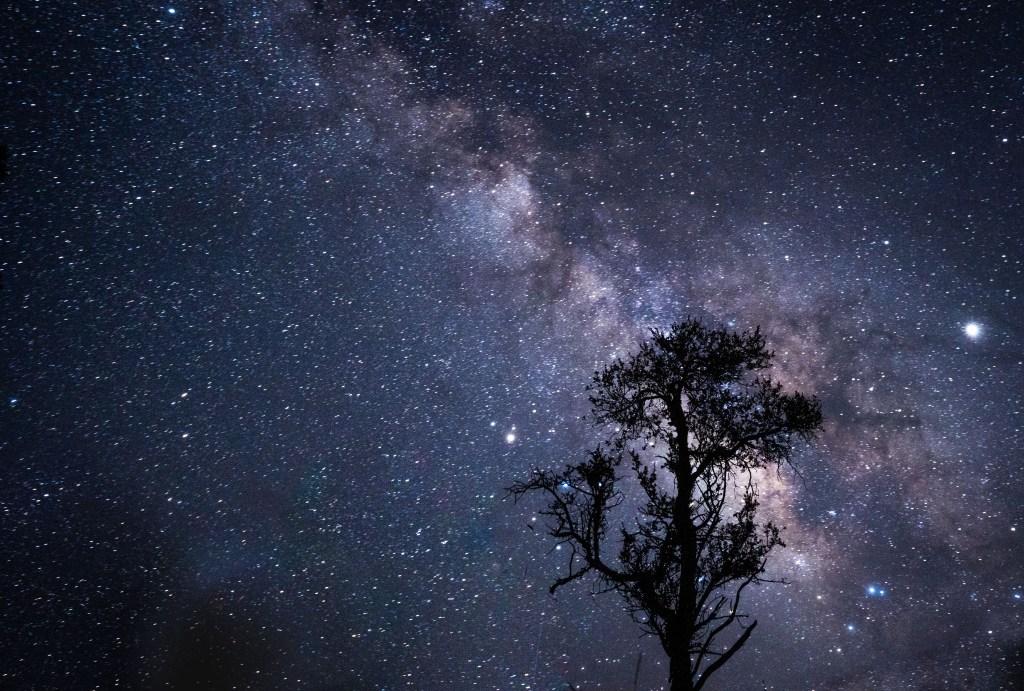 tree silhouette milky way international dark-sky association