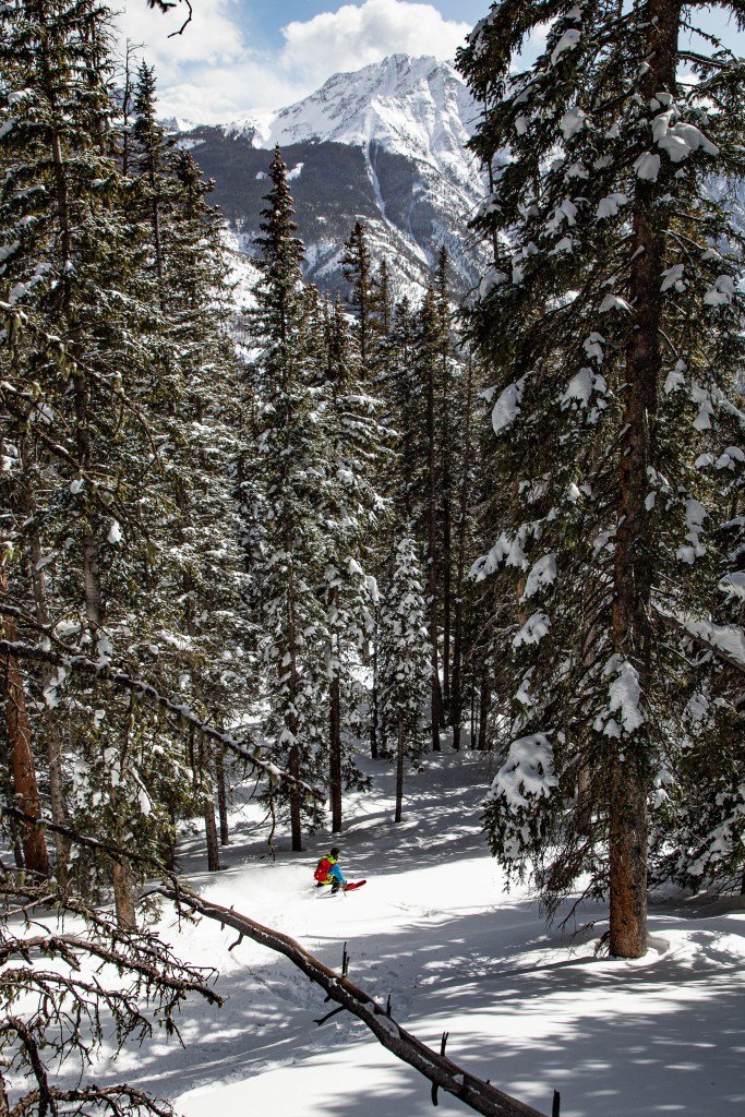 high elevation forests spruce trees backcountry skiing