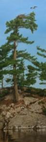 "Bird's Eye View (Osprey) Acrylic on Canvas 16"" x 18"""