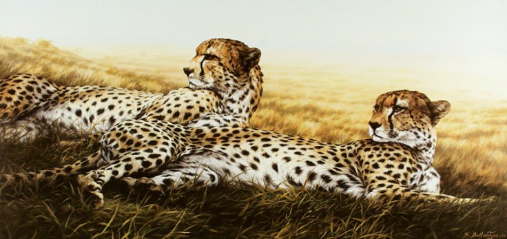 "Siesta (Cheetahs) 18""X 36"" Acrylic on Canvas SOLD"