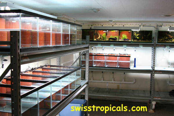 HMF aquarium filtration at Swiss Tropicals