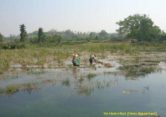 CPD habitat in Myanmar