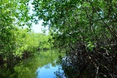 Sierpe de Osa - Palmar , Pacifico Sur Costa Rica - Ballena Tales Magazine, kokopelli-sierpe-kokopelli-sierpe-restaurant-tours-mangrove-corcovado-nature-sierpe-tour