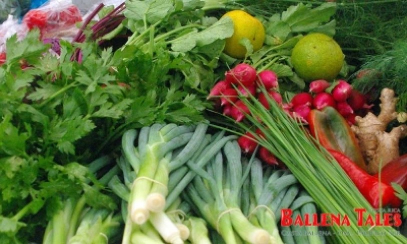 organic-vegetable, Food, Health & Exercise