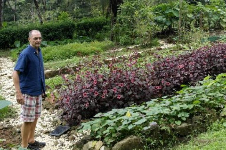 Permaculture at Tom's estate