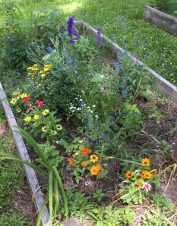 Summer Butterfly Garden at the Ballentine-Spence House