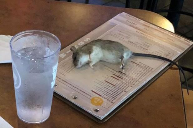 Rat at BWW