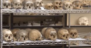 Penn Museum skulls