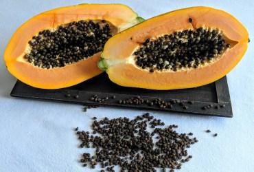 Papaya Kerne - eine Naturarznei