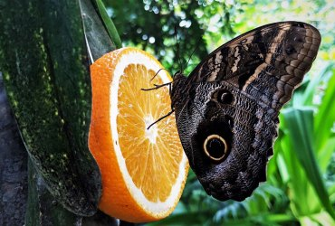 Die Schmetterlinge auf Usedom