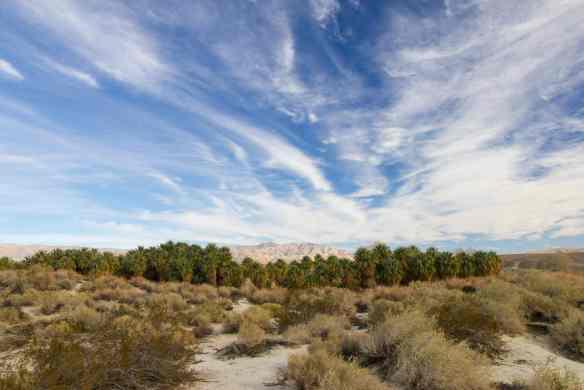 Coachella-Valley-Preserve-California-Twitter (1 of 1)