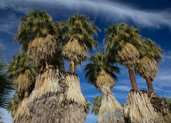 Coachella-Valley-Preserve-California-Twitter1 (1 of 1)