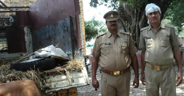 सिकंदरपुर पुलिस ने वध हेतु ले जाए जा रहे 7 मवेशियों को मुक्त कराया