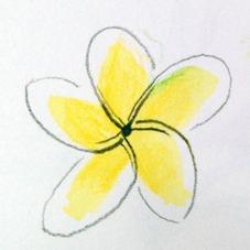 Frangipani Flower Sketch 2, Lovina, Bali