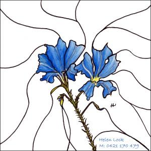 Blue Leschenaultia FS Frame and Name copy