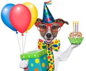 Party dog with Balloons at Balloons Shop NYC