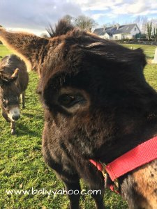 funny donkey illustrating children's stories from Ireland's magical town of Ballyyahoo
