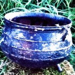 Miss parrots return. IMAGE OF A CAULDRON