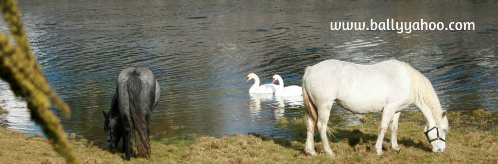 Horses and swans at a river - illustrating a series of free online stories for kids
