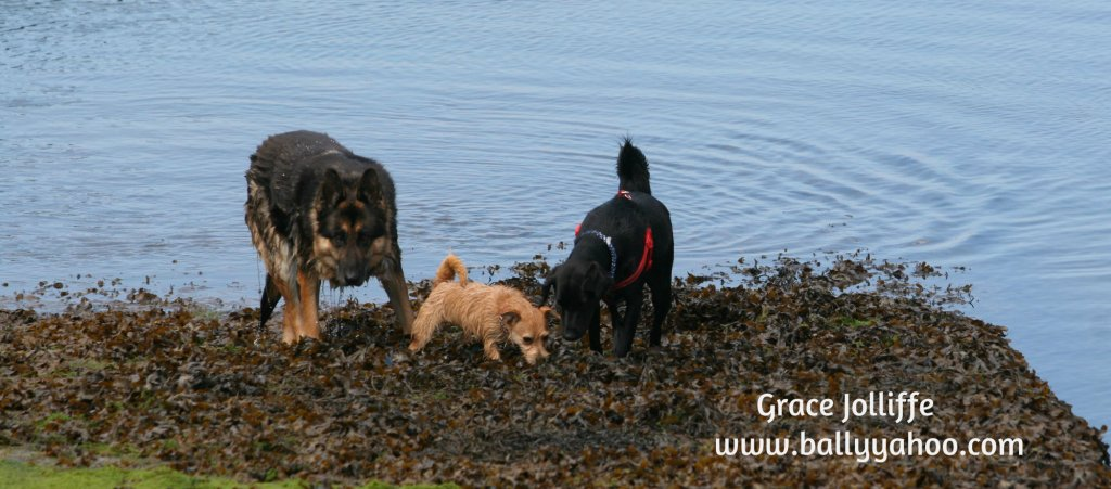 three dogs playing by the sea llustrating a children's story about dogs