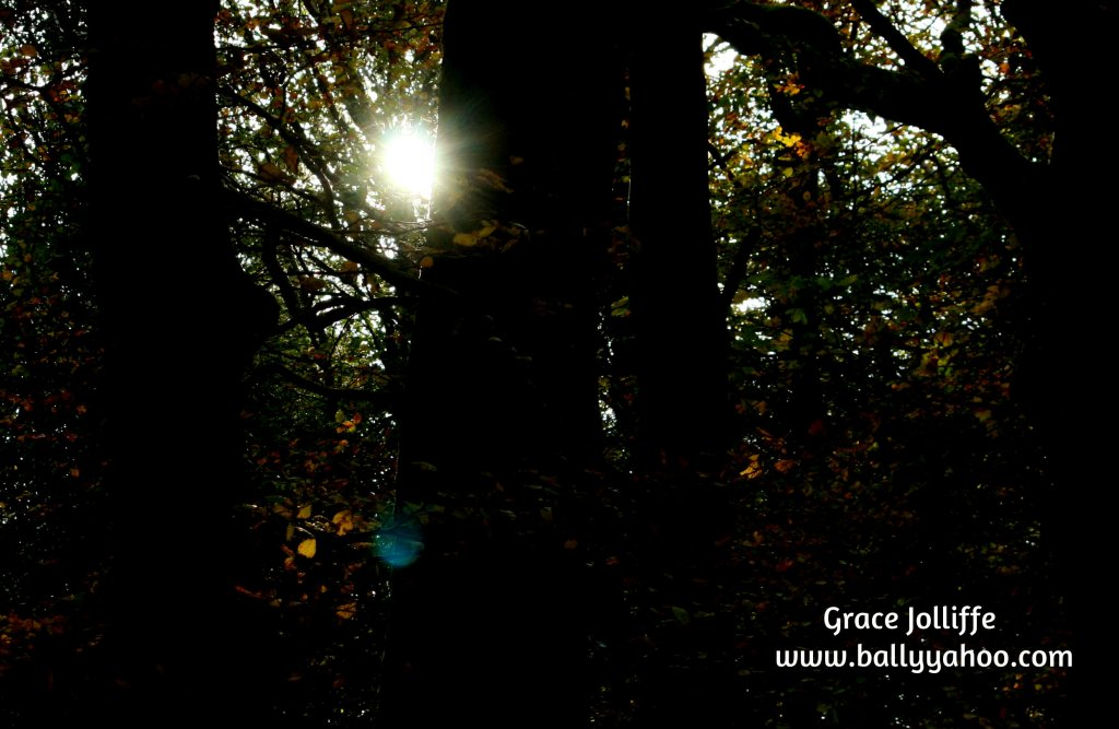 sun through trees in a woods illustrating a children's story from Ireland's magical town of Ballyyahoo