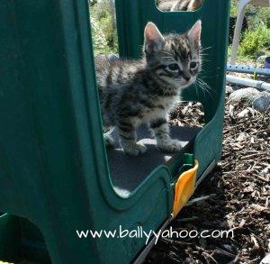 beautiful kitten on a garden stool - illustrating kitten stories from Ireland's Ballyyahoo