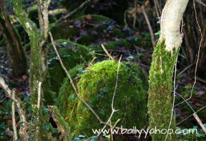 mossy stumps and rocks about following woodlands trails