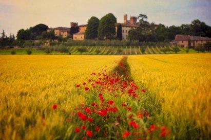 Monteroni dArbia, Tuscany, Italy